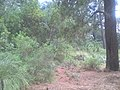 Bosque en Nanacamilpa, Tlaxcala.jpg