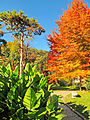 Botanička bašta Jevremovac, Beograd, jesenje boje, svetlost i senke 12.jpg