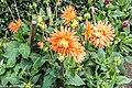 Botanic Gardens In Glasnevin (Dublin) (7951843674).jpg
