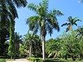 Botanical Gardens (34751605222).jpg