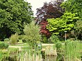Botanischer Garten Freiburg - DSC06404.jpg