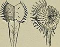 Botany for high schools (1910) (20379604016).jpg