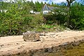 Boulder, Loch Rannoch Shoreline - geograph.org.uk - 1894453.jpg