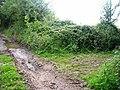 Bridleway-footpath-by-way junction - geograph.org.uk - 543503.jpg