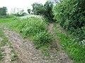 Bridleway near Maplebank Farm - geograph.org.uk - 1314989.jpg