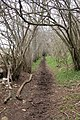 Bridleway through coppiced wood - geograph.org.uk - 154194.jpg
