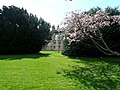 Brodie Castle gardens. - geograph.org.uk - 1247134.jpg
