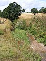 Brook near Warrengate Farm - geograph.org.uk - 1416773.jpg
