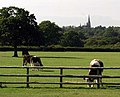 Bucolic view with St Hugh's Monastery behind - geograph.org.uk - 252310.jpg
