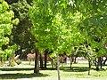 Buin, Chile - panoramio (3).jpg