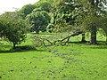Bunnies on the haugh - geograph.org.uk - 818772.jpg