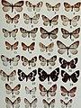 Butterflies and moths of Newfoundland and Labrador - the macrolepidoptera (1980) (20502290232).jpg