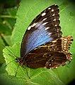 Butterfly (67132281).jpeg