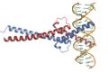 C-Myc-DNA complex.png