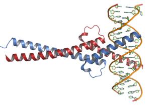 Myc protein-coding gene in the species Homo sapiens