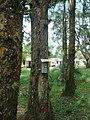 CAMPING PARQUE CURUMIM - panoramio - jkern.jpg