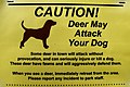 CAUTION! Deer May Attack your Dog 4889314766.jpg