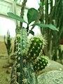 Cactus20170706 152257.jpg