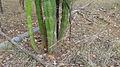 Cactus (10868830436).jpg