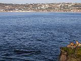 California sea lions in La Jolla (70581).jpg
