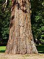 Campagne (24) château parc sequoia tronc.JPG