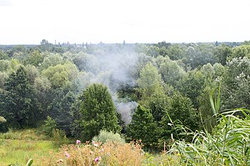English: Campfire smoke in forest, Marki, Pola...