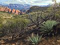 Canyons and Agaves (16139495850).jpg