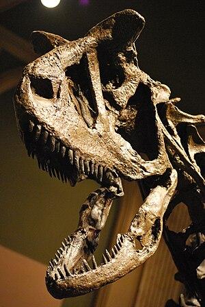 Carnotaurus - Skull cast, Dinosaur Discovery Museum, Kenosha, Wisconsin