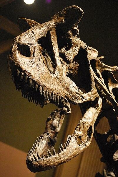 File:Carnotaurus Skull.jpg