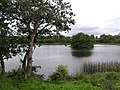 Carnteel Lough - geograph.org.uk - 244173.jpg