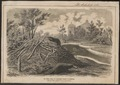 Castor fiber - 1866 - Print - Iconographia Zoologica - Special Collections University of Amsterdam - UBA01 IZ20400205.tif