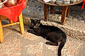 Cat in Baščaršija (6086310911).jpg