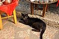 Cat in Baščaršija (6086310911).jpg