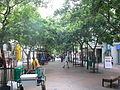Celtis africana - Cape Town street 2.JPG