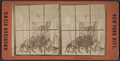 Central Park Menagerie, from Robert N. Dennis collection of stereoscopic views 2.png