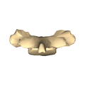 Cervical vertebra 7 close-up posterior surface.png