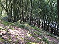 Chapel Hill Woods - geograph.org.uk - 257571.jpg