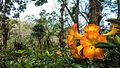 Chiang Rai (23496217304).jpg