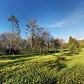 Chisinau Dendrarium - summer flower field.jpg