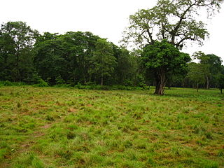 Chitwan Jungle Safari Day Tours