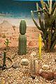 Christchurch Botanic Gardens cactus pavilion 2016-02-04-2.jpg