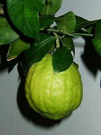 Citrus medicus fruit