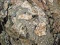 Clast-rich impact pseudotachylite (Sudbury Breccia, Paleoproterozoic, 1.85 Ga; Windy Lake Northwest roadcut, Sudbury Impact Structure, Ontario, Canada) 1 (46819354105).jpg