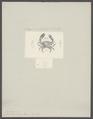 Clorodius niger - - Print - Iconographia Zoologica - Special Collections University of Amsterdam - UBAINV0274 094 16 0006.tif