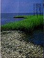 Coast watch (1979) (20036582194).jpg