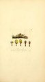 Coloured Figures of English Fungi or Mushrooms - t. 279.png