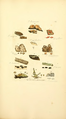 Coloured Figures of English Fungi or Mushrooms - t. 369.png