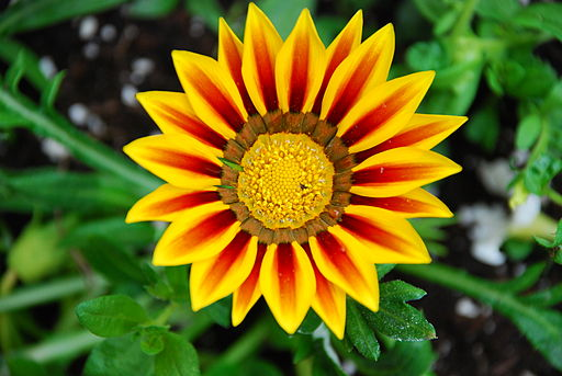 Colourful Flower 01