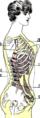 Comment le corset cambre deforme le corps.png