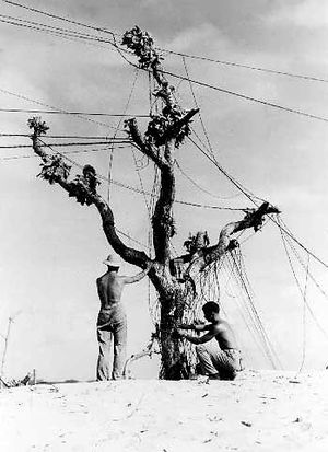 Communications men string telephone wire on an...